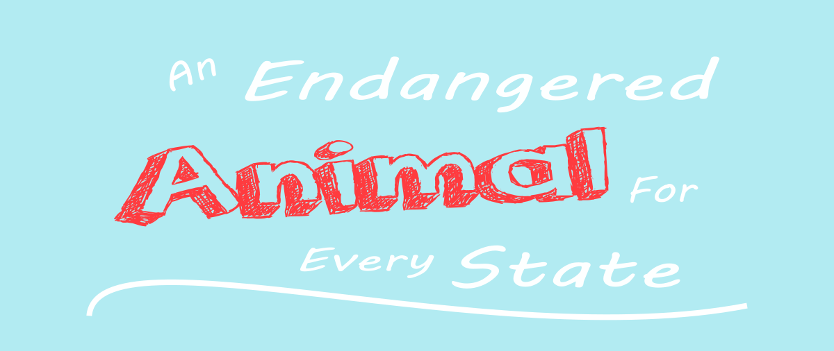 An Endangered Animal For EveryState