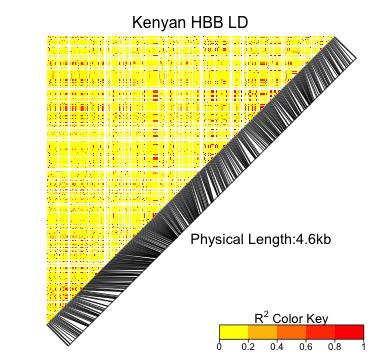 KenyaHBB